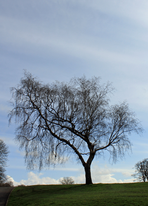 Tree in Sefton Park, Liverpool
