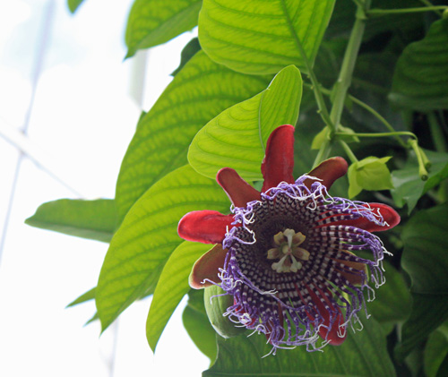 Kew Flower