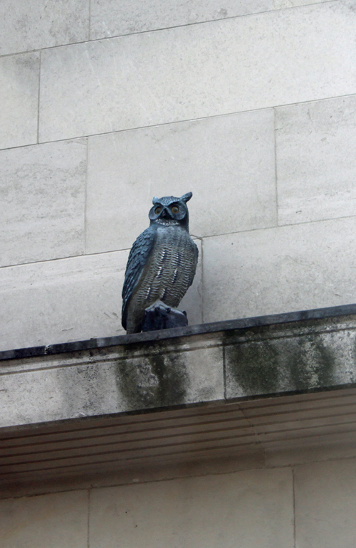 Owl figure on Whitehouse building Waterloo