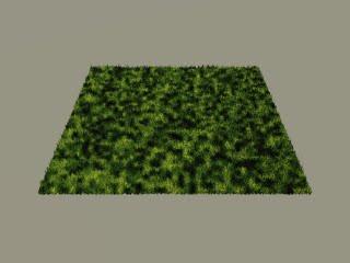 Vue short Grass